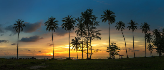 Coconut palms on the beach the evening panorama.