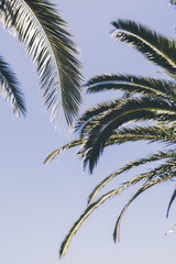 Palm trees leaves in the sky