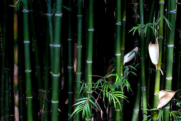 Low key green bamboo background