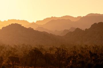 Shades of the desert.