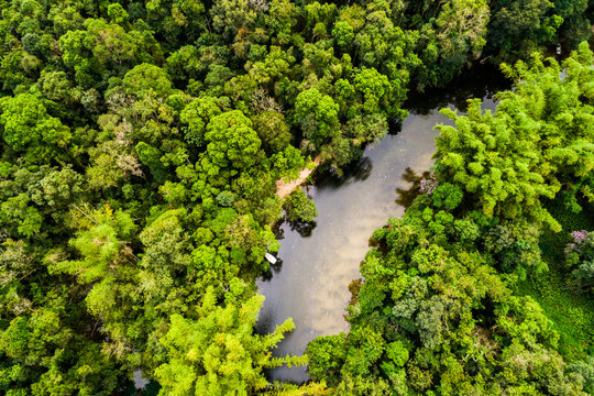 Aerial View of Amazon Rainforest, South America