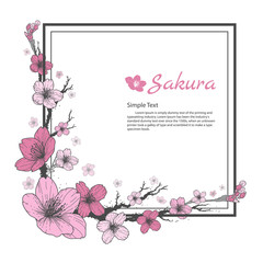 Flower frame of Sakura. Drawing and sketch on white background.