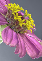closeup of an Indiana wildflower