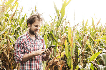 Farmer working on (using) tablet in front of corn field