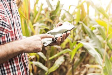 Tablet in farmer's hands, corn field as background
