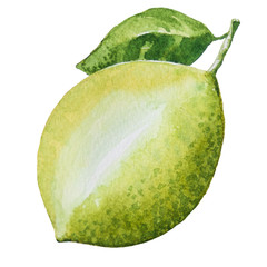 Lemon painting.Painted with watercolor.