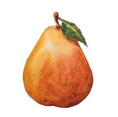 Pear fruit painting.Painted with watercolor.