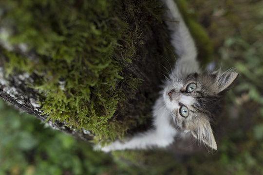 Kitten climbing a tree