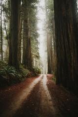 Redwood path