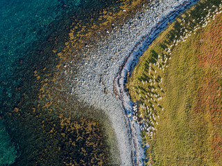 Aerial drone view of nature coastline with herd of goats on pasture