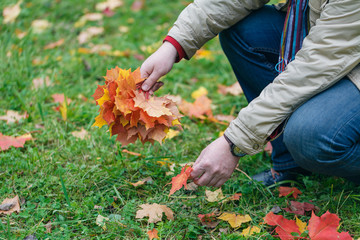 Autumn red maple leaves in hands in forest
