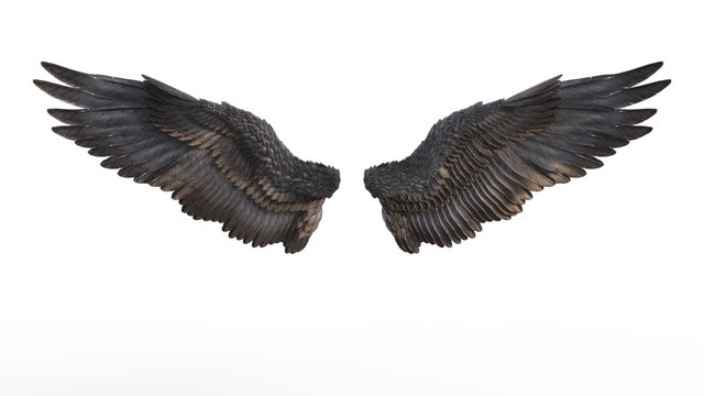3d Illustration Demon Wings, Black Wing Plumage Isolated on White Background