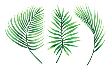 Watercolor painting set coconut, palm leaf,green leave isolated on white background.Watercolor hand painted illustration tropical exotic leaf for wallpaper vintage Hawaii style pattern.clipping path