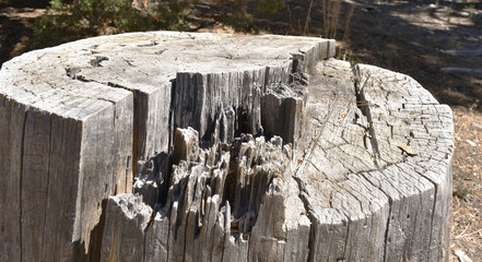 Wood, bark and tree textures
