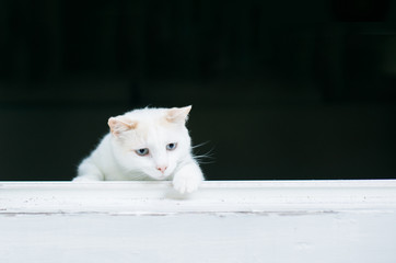 White cat stalking prey from an open window.