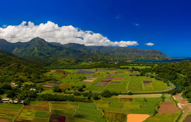 Hanalei Bay taro farms