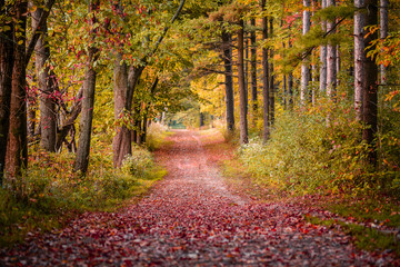 Walking Path in  Autumn with colorful trees