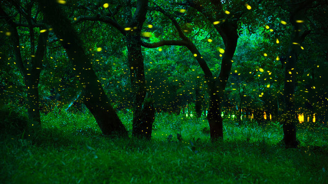 Firefly flying in the forest..Fireflies in the bush at night at Prachinburi province, Thailand..Long exposure photo..The forest in fairy tale. Magic fairy forest
