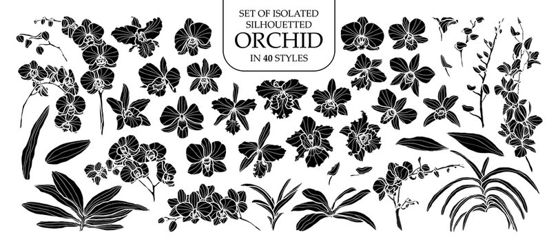 Set of isolated silhouette orchid in 40 styles. Cute hand drawn vector illustration in white outline and black plane.