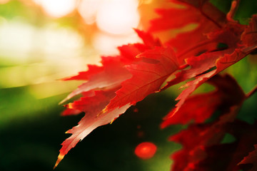 Colorful foliage with shallow depth of field in a public park in the fall
