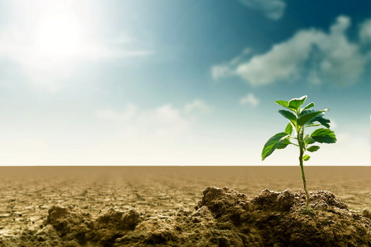 Climate Change, global warming and Sustainable Concept