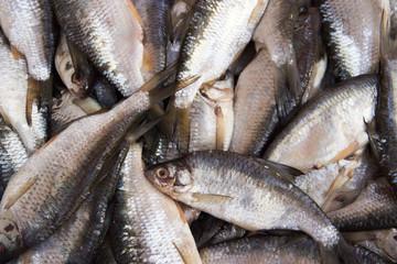 fish roach, ram fresh. Rich catch