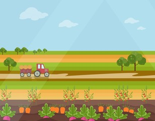 Harvest season Agriculture land field view Vector background