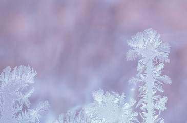 Frosty pattern in the form of palm tree on  gentle lilac background of window glass.