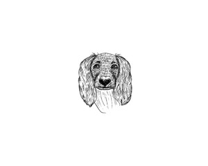 drawing illustration of spaniel dog cartoon pencil and charcoal on paper art and pastel black sketch on white background