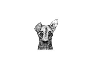 drawing illustration of Jack Russel breed dog cartoon pencil and charcoal on paper art and pastel black sketch on white background