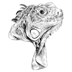 iguana sketch head vector graphics in black-and-white monochrome pattern