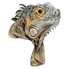 iguana sketch head vector graphics color picture