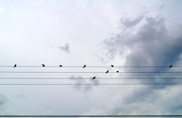 birds on light wires