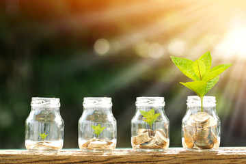 Coin in the bottle and plant growing with savings money put on the wood in the morning sunlight, Business investment and saving growth concept.