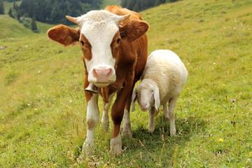 Freundschaft eines Schafes mit einem Kalb
