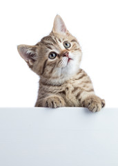 Funny cat kitten peeking out of a blank cardboard, isolated on white background