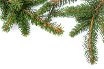Christmas greeting card. Branch of fir on white background and copy space