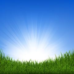 Grass And Sunbeam