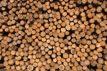 Aluminium Prints Holz