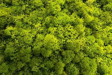 Moss als grafisches element oder Hintergrund