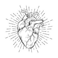 Hand drawn human heart with sunburst anatomically correct art. Flash tattoo or print design vector illustration