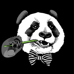 Panda portrait in a tie with bamboo branch on black background. Vector illustration.