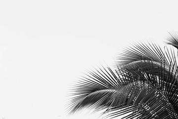 palm coconut leaf - monochrome