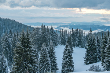 Snow-covered forest in winter mountains