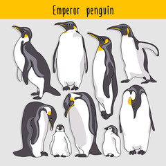 Set of a Emperor penguin. Vector illustration.
