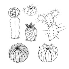 Vector set of cactus. Hand drawn botanical art isolated on white background. Desert plants cactus collection. Use for your design
