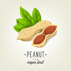 Vector sketch of realistic peanut with leaves and seeds. Drawn nuts icon isolated on background. Painted emblem good for recipe book, booklet, card, menu or banner design.