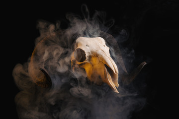 Ram skull with horns covered in smoke