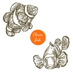 Set of clown fish. Vector illustration