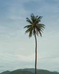 Palm trees on the shore of sea
